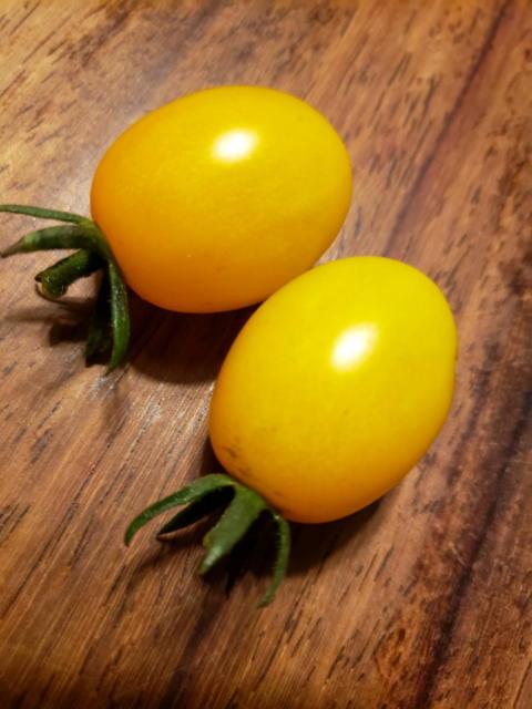 黄色いプチトマト