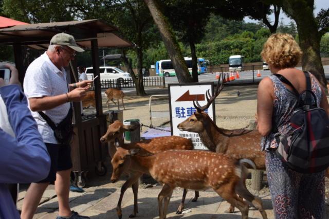 奈良公園 鹿せんべい