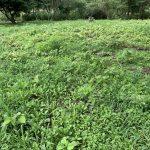 草刈り 効率良い方法