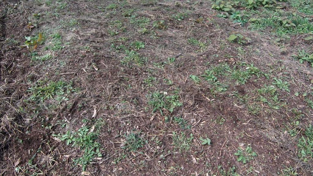 スパイラルローラー400 マキタ充電式芝刈り機 雑草刈り 比較